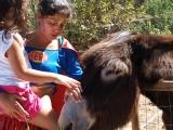 Visita aos Animais da Quinta Pedagógica